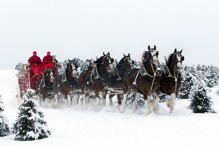 snowhorses