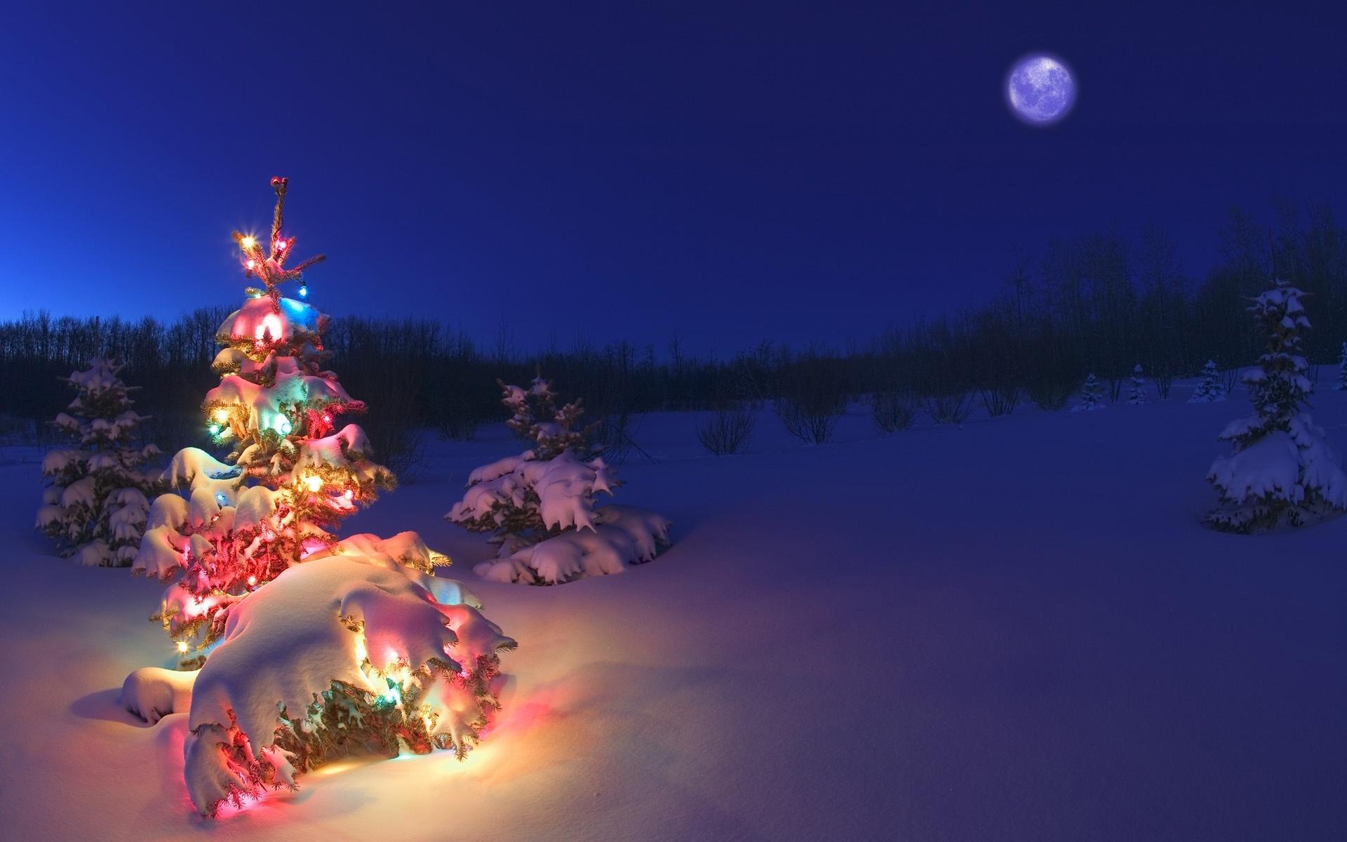 Google Weihnachtsbilder.Winter Delights My Enduring Bones