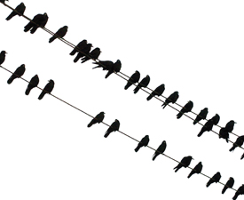 as-the-crows-fly